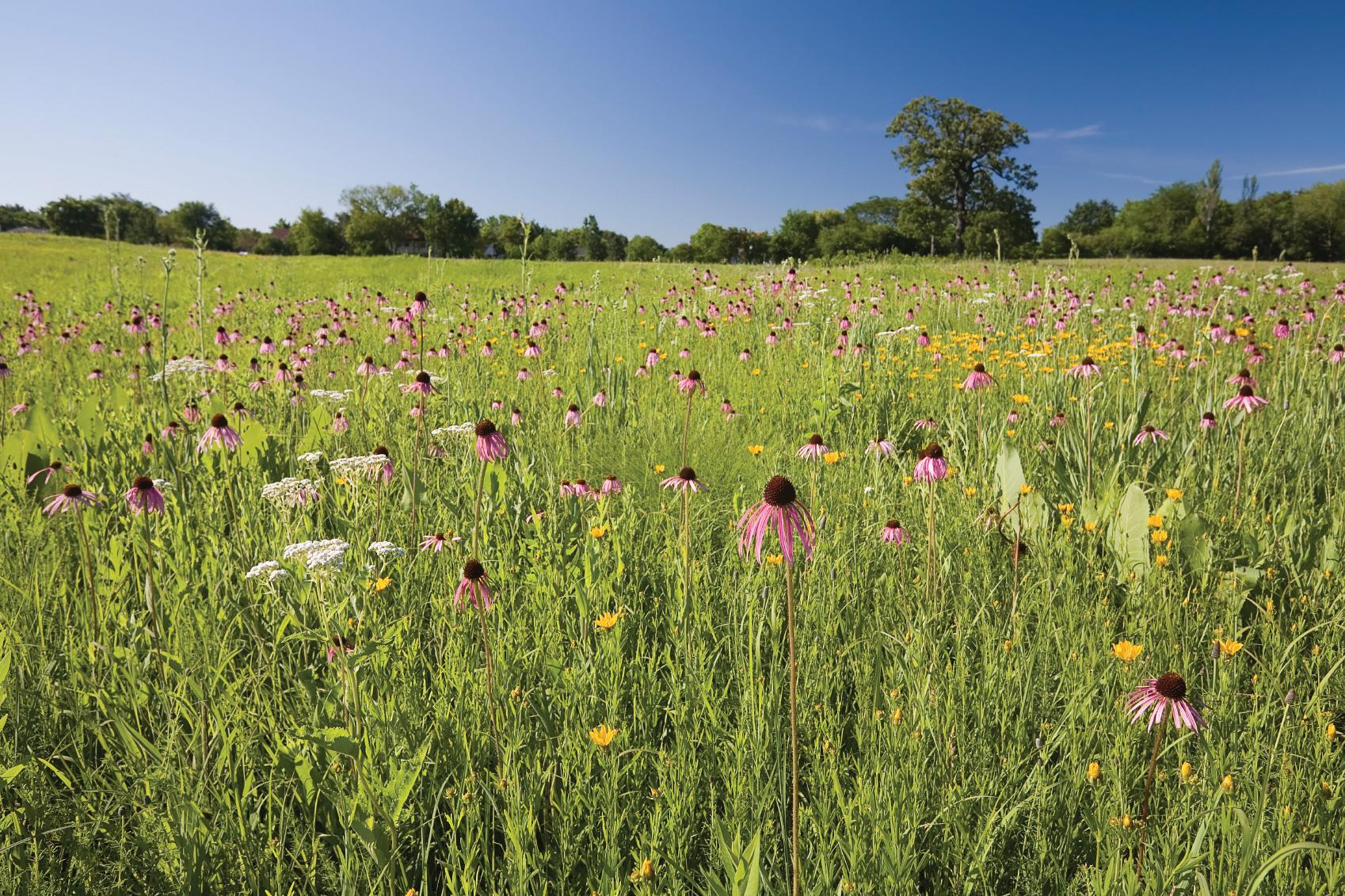Peaceful Prairies & Gardens Above