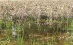 wetland15