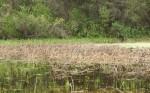 wetland4