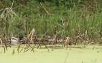 wetland8