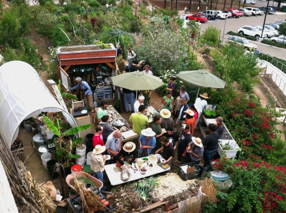 Seeds @ City Urban Farm | San Diego City College