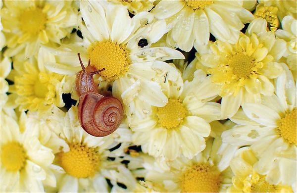 A snail enjoying the morning dew | Photography by Audrey Green, My Shot
