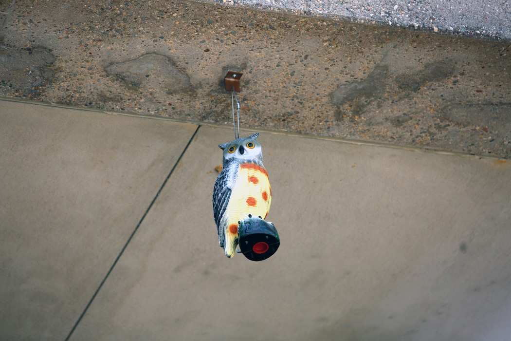 This $9 plastic owl deters Cliff Swallows from nesting near the East and West entrances of DCTC.