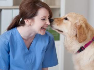 DCTC Veterinary Technician