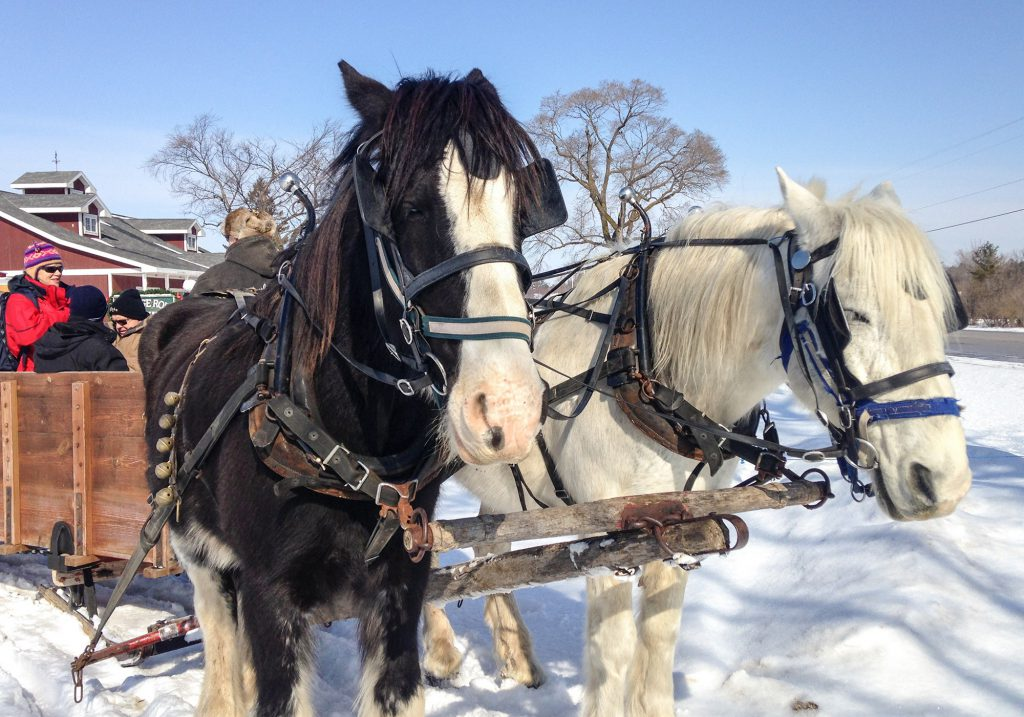 Sleigh ride on old logging trails