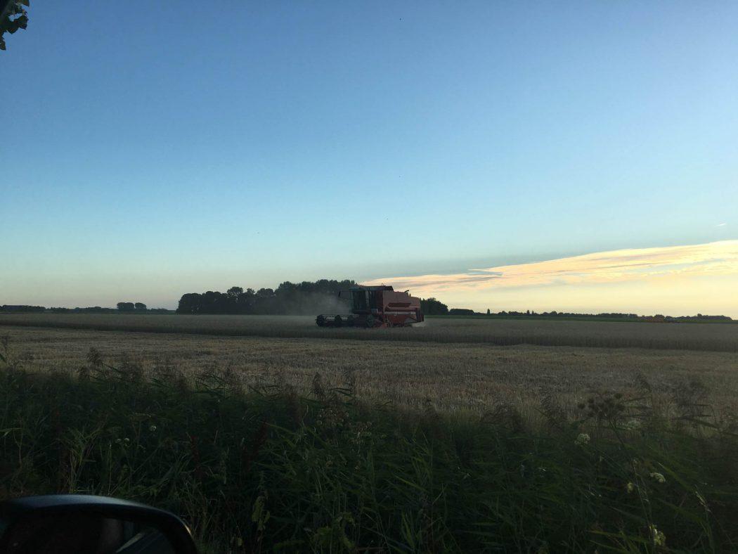 Harvest northeast of Amsterdam