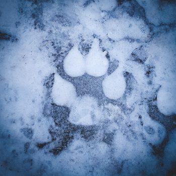 Frozen Imprint