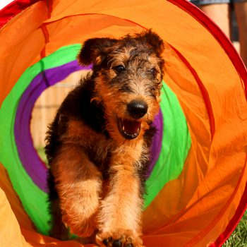 Joyful Puppy